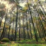 hutan homogen