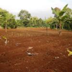 Tanah latosol