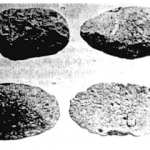 pebble kapak genggam sumatera