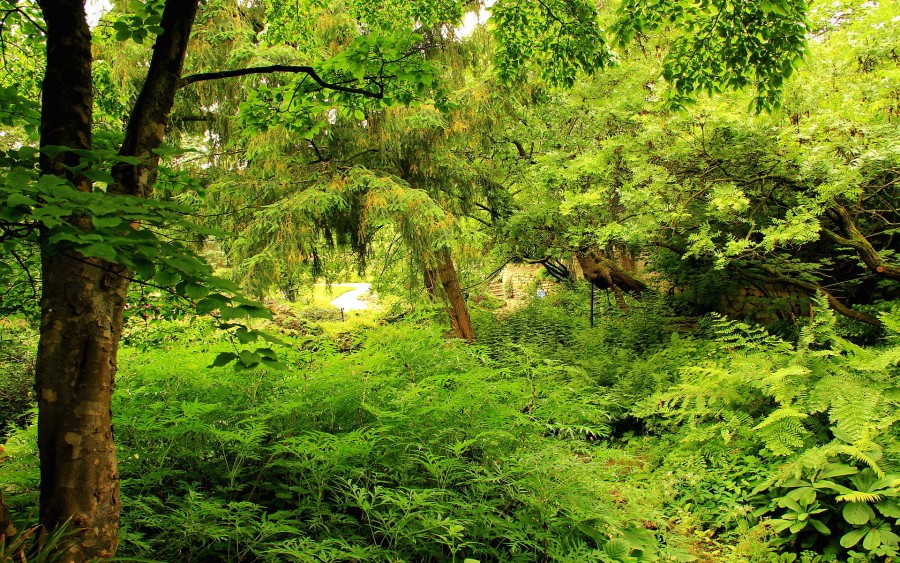 Gambar Flora Di Indonesia 2021